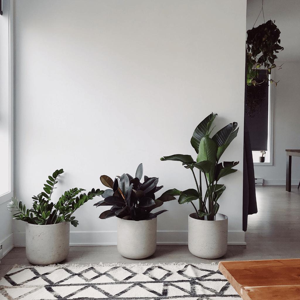 plantas-decoração